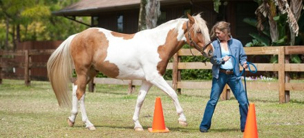 Equine Therapy professional with therapy horse